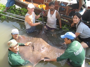 Thailand freshwater stingray fishing